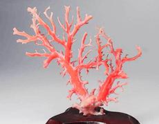 赤珊瑚 原木