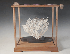 白珊瑚 彫刻 置物