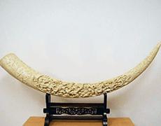 象牙の牙(一本物) 細密彫り